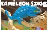 Eladó Ambanja Blue párduckaméleonok - előnézeti képe