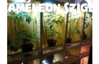 Kaméleon megőrzés - Kaméleon panzió - előnézeti kép