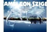 Kaméleonok téli szállítása - előnézeti képe